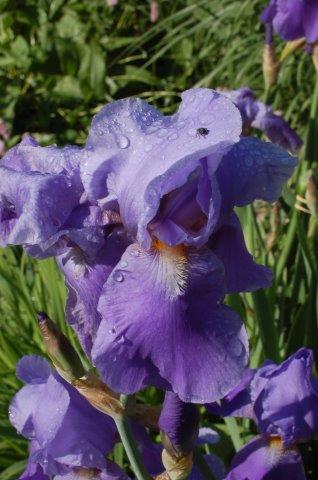 Blumen.06.2010 039