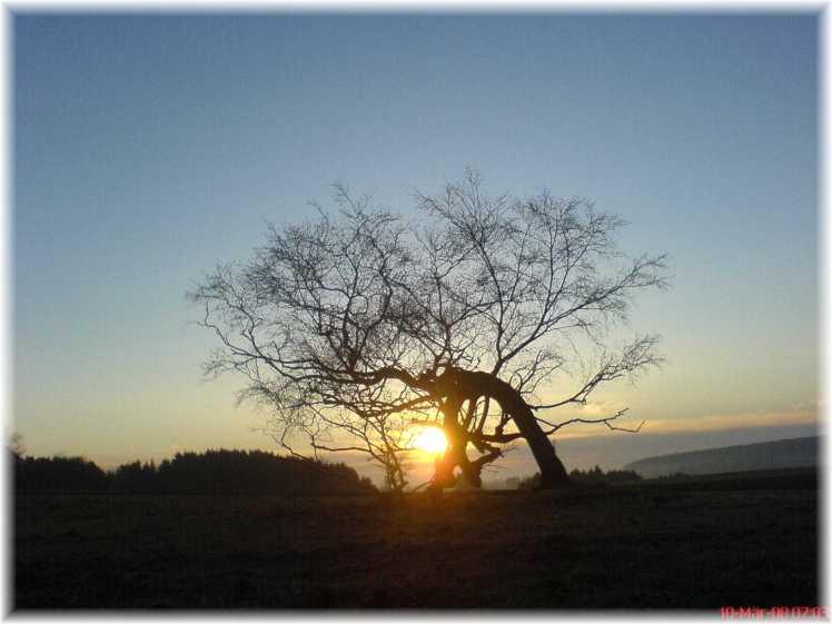 Sich neigender Baum